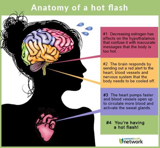 anatomy of a hot flash