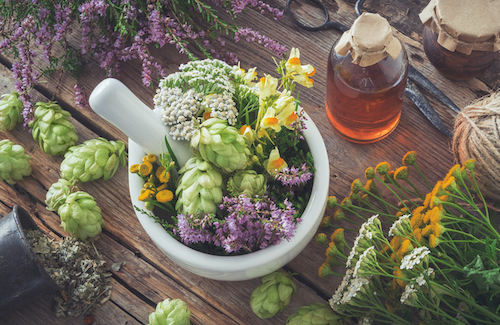 plants and herbs for menopause