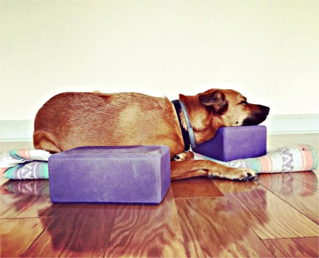 Dog resting his head on yoga blocks