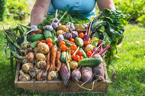 There are many health benefits to eating root vegetables