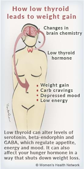pathway to thyroid weight gain