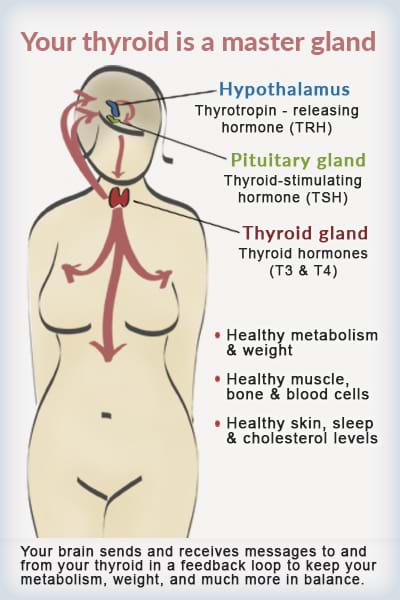 hypothyroidism and menopause